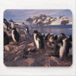 La Antártida, polluelos del pingüino de Adelie Tapetes De Ratón