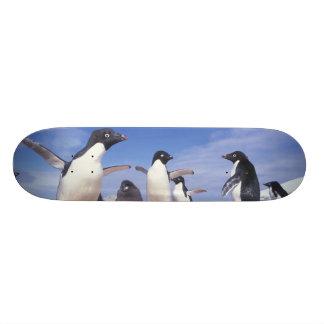 """La Antártida, Pygoscelis del pingüino de Adelie Patineta 7 3/4"""""""