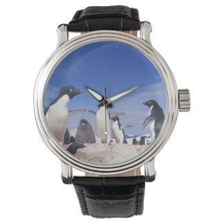 La Antártida, Pygoscelis del pingüino de Adelie Reloj De Mano