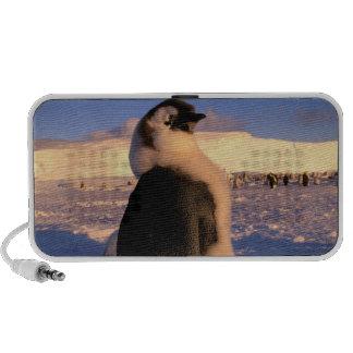 La Antártida, territorio antártico australiano, 2 Notebook Altavoces