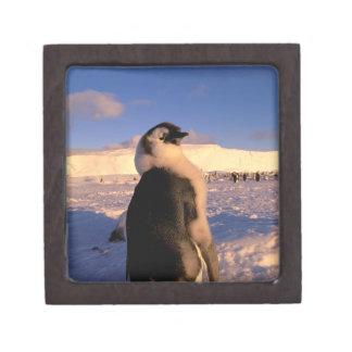 La Antártida territorio antártico australiano 2 Caja De Regalo De Calidad
