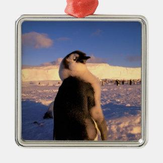 La Antártida, territorio antártico australiano, 2 Ornamente De Reyes