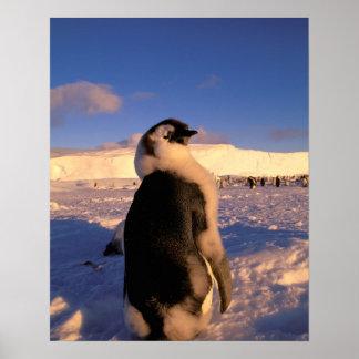 La Antártida, territorio antártico australiano, 2 Póster