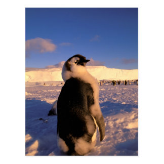 La Antártida, territorio antártico australiano, 2 Tarjeta Postal