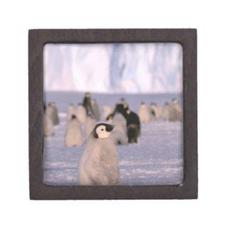 La Antártida territorio antártico australiano 3 Caja De Joyas De Calidad