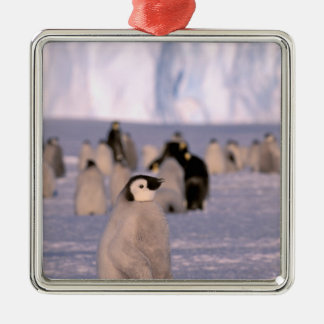 La Antártida, territorio antártico australiano, 3 Ornamento Para Reyes Magos