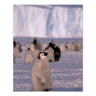 La Antártida, territorio antártico australiano, 3 Póster