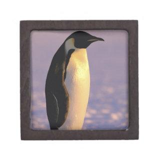 La Antártida territorio antártico australiano 4 Cajas De Recuerdo De Calidad