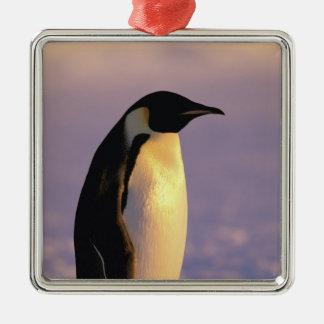 La Antártida, territorio antártico australiano, 4 Ornamento De Navidad