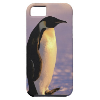 La Antártida, territorio antártico australiano, 4 iPhone 5 Fundas