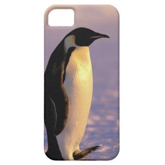 La Antártida, territorio antártico australiano, 4 iPhone 5 Funda