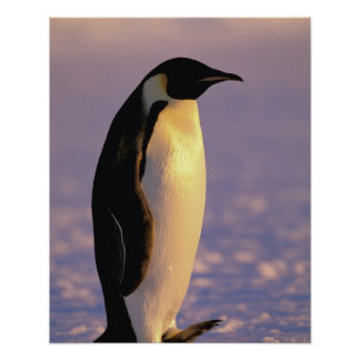 La Antártida, territorio antártico australiano, 4 Póster
