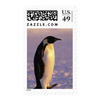 La Antártida, territorio antártico australiano, 4 Franqueo