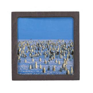 La Antártida territorio antártico australiano 5 Cajas De Joyas De Calidad