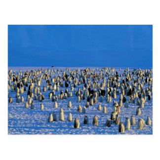 La Antártida, territorio antártico australiano, 5 Tarjeta Postal