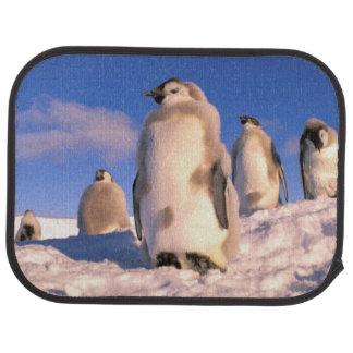 La Antártida, territorio antártico australiano, 6 Alfombrilla De Auto