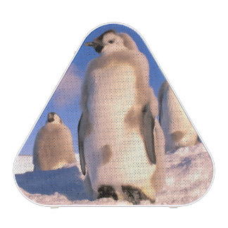 La Antártida, territorio antártico australiano, 6 Altavoz