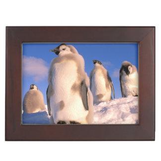 La Antártida territorio antártico australiano 6