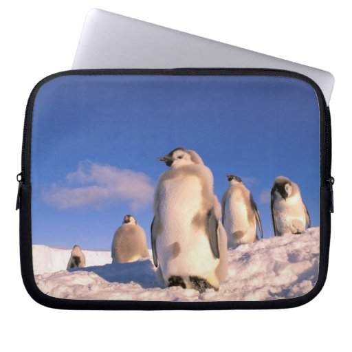 La Antártida, territorio antártico australiano, 6 Funda Computadora