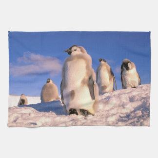 La Antártida, territorio antártico australiano, 6 Toallas De Cocina
