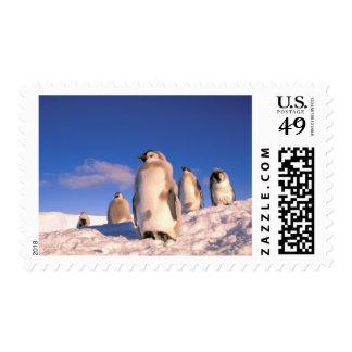 La Antártida, territorio antártico australiano, 6 Sello