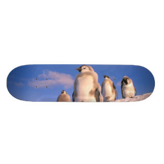 La Antártida, territorio antártico australiano, 6 Skate Board
