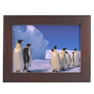 La Antártida territorio antártico australiano 7