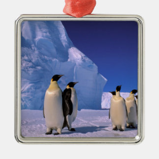 La Antártida, territorio antártico australiano, 7 Ornamentos Para Reyes Magos