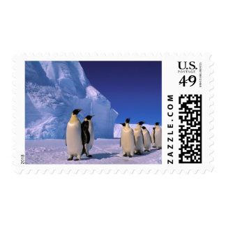 La Antártida, territorio antártico australiano, 7 Estampillas
