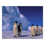 La Antártida, territorio antártico australiano, 7 Poster