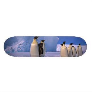 La Antártida, territorio antártico australiano, 7 Patín