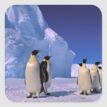 La Antártida, territorio antártico australiano, 7 Pegatina Cuadrada