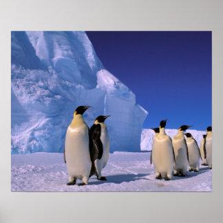 La Antártida, territorio antártico australiano, 7 Póster