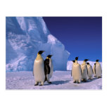La Antártida, territorio antártico australiano, 7 Postales