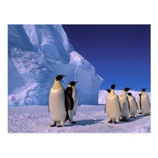 La Antártida, territorio antártico australiano, 7 Tarjetas Postales