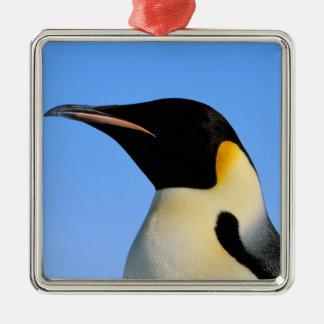 La Antártida, territorio antártico australiano, 8 Ornamento De Reyes Magos