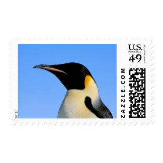 La Antártida, territorio antártico australiano, 8 Sello