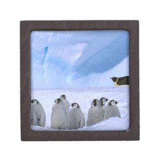 La Antártida territorio antártico australiano ca Caja De Recuerdo De Calidad