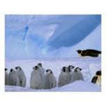 La Antártida, territorio antártico australiano, ca Impresiones