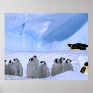La Antártida, territorio antártico australiano, ca Póster