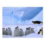 La Antártida, territorio antártico australiano, ca Tarjeta Postal