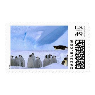 La Antártida, territorio antártico australiano, Estampillas