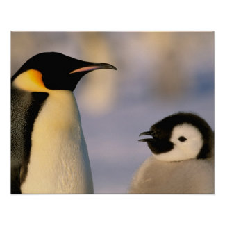 La Antártida, territorio antártico australiano, Póster