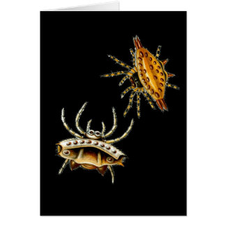 La araña del cangrejo y el orbe-tejedor espinoso tarjeta de felicitación
