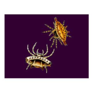 La araña del cangrejo y el orbe-tejedor espinoso tarjetas postales