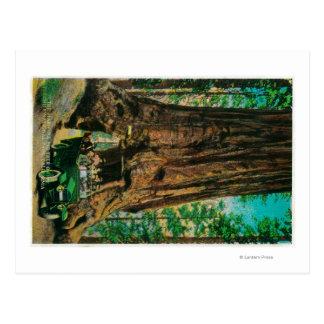 La arboleda grande del árbol de Mariposa, Yosemite Postal