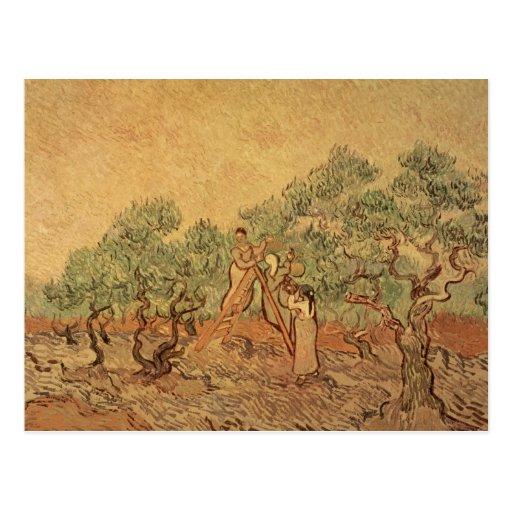 La arboleda verde oliva, 1889 postales