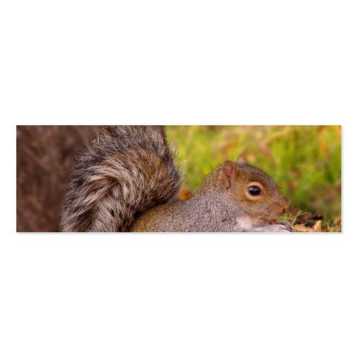 La ardilla en caída sale de la acción de gracias tarjetas de visita mini