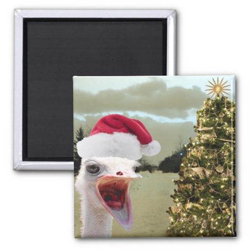 La avestruz consigue emocionada sobre navidad imán cuadrado