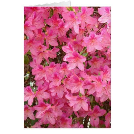 La azalea de las AZALEAS florece la NOTA de la TAR Tarjeta